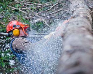 Boomverzorger hakt boom in stukken