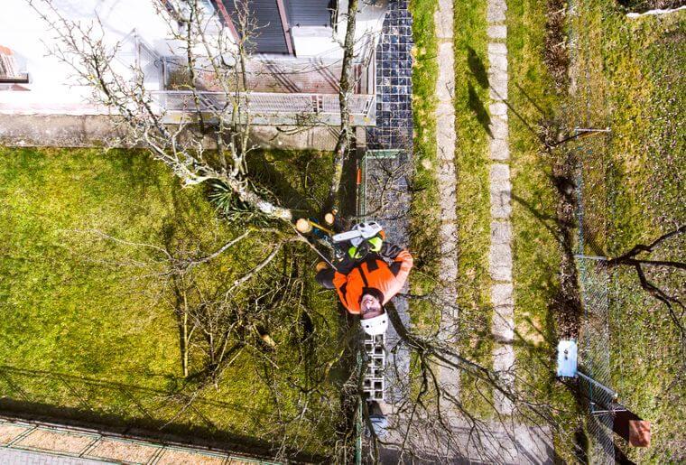 Boomverzorger kapt boom van boven naar beneden