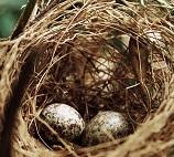 Vogelnest in boom
